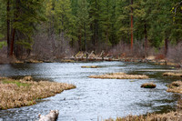 Near the headwaters of the Metolius