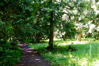 Feyrer County Park - Molalla Oregon